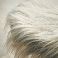フェイクファースツール「wig(ウィッグ)」