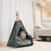 Pet Tipi tent(ペットティピーテント)