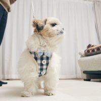 Pet Harness – ペットハーネス - リード付き