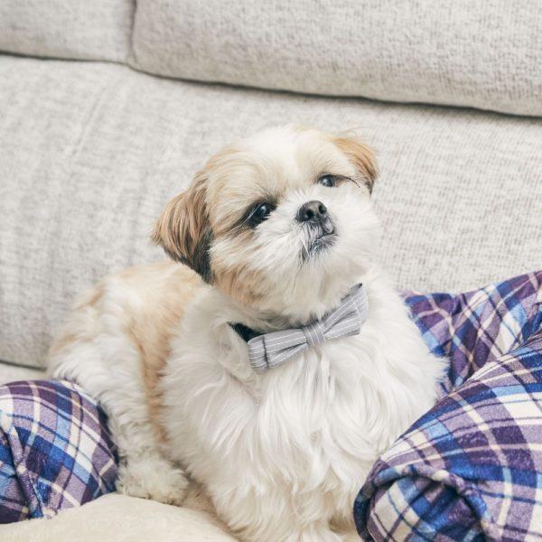 Pet short tie(ペットショートタイ)& Pet bow tie(ペットボウウタイ)