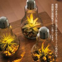 電球型インテリアテーブルライト Terrarium(テラリウム)
